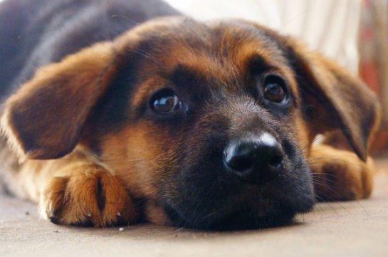Ученые поняли, как собаки стали домашними