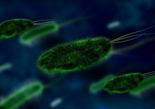 Бактерии могут оказывать влияние на то, что люди думают
