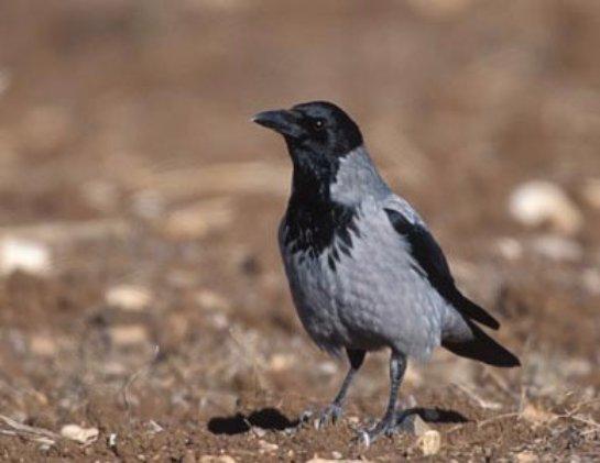 Ученые назвали птицу, которая умеет считать