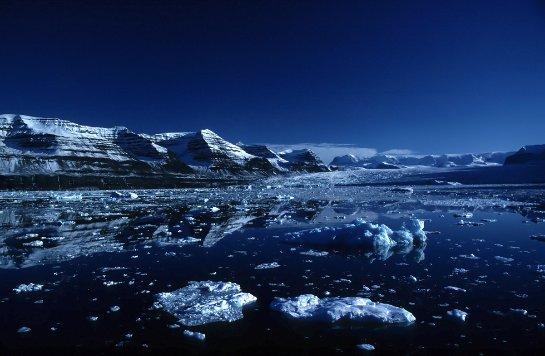 У арктических животных произошли изменения в пищевой цепочке