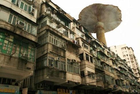 Гигантские грибы – фантастический источник энергии и воды