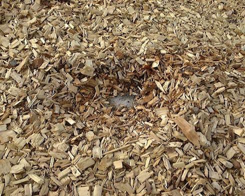 BioCrack – дизельное топливо из опилок