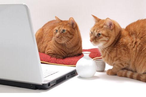 Фестиваль видеороликов о котах собрал более 10 тыс заявок