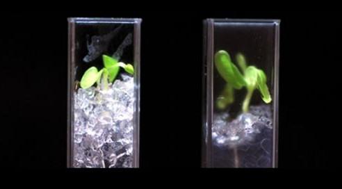 Ученые получили прозрачную почву