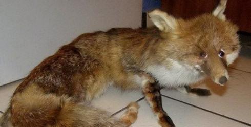 В Firefox 16 обнаружена опасная уязвимость