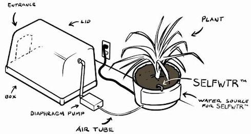 Фиторемедиация – эффективная система очистки воздуха
