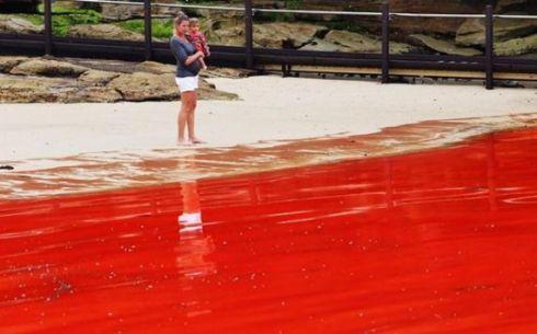 «Красный прилив» в Австралии