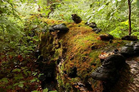 Биотопливо из грибов