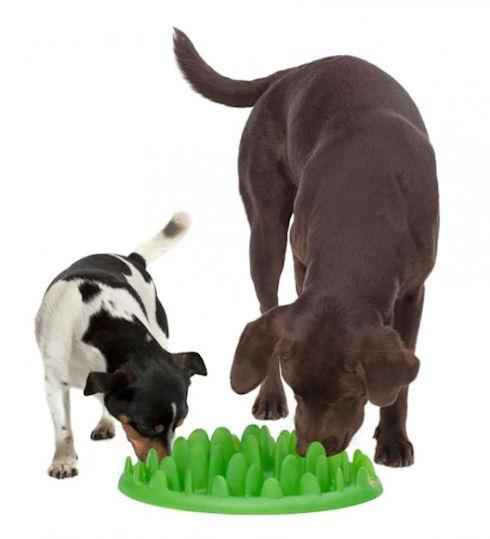 Миска Green научит собаку правильно питаться