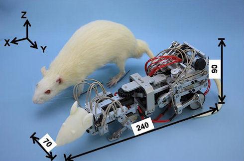 Робот поможет в исследовании стресса и депрессии