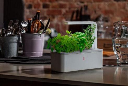 Smart Herb Garden – автоматический огород для города