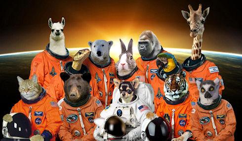 Компания животных и растений отправится в космос