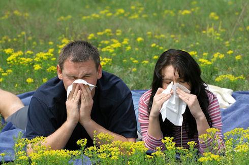 Аллергия обходит бедняков стороной