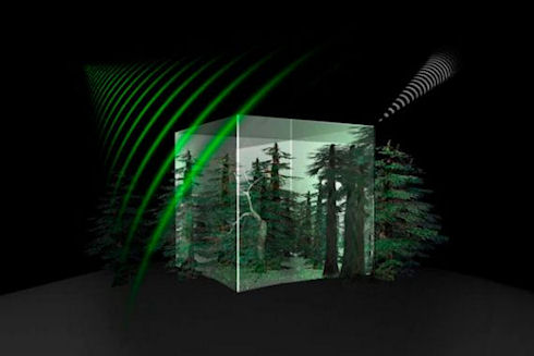Спутник «Biomass» оценит влияние лесов на климат Земли