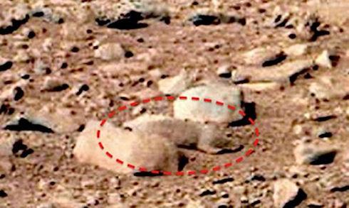 На фотографиях с Марса обнаружены крысы