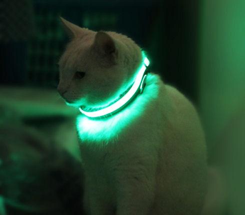 HALO MINI – ошейник для домашних животных с подсветкой