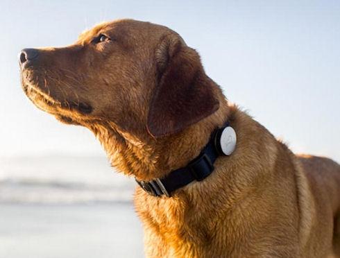 Whistle Dog Collar – статистика собачьей жизни