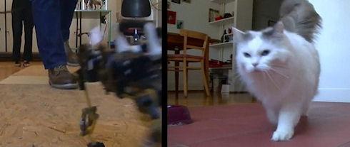 Кошка-робот поможет разработать робота-спасателя