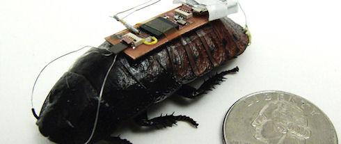 Ученые «скрестили» таракана и Kinect