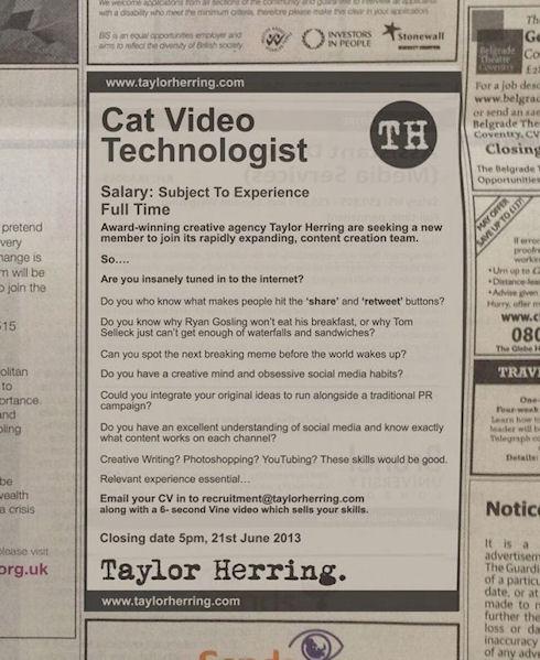В Англии ищут специалиста по кошачьим мемам