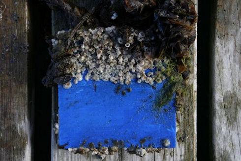 Ученые дадут бой моллюскам