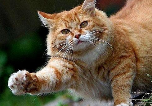 Ученые стали лучше понимать кошачий язык