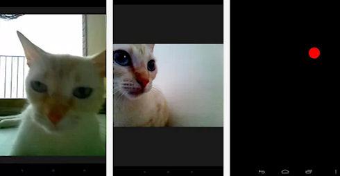 Snapcat – кошки-фотолюбители