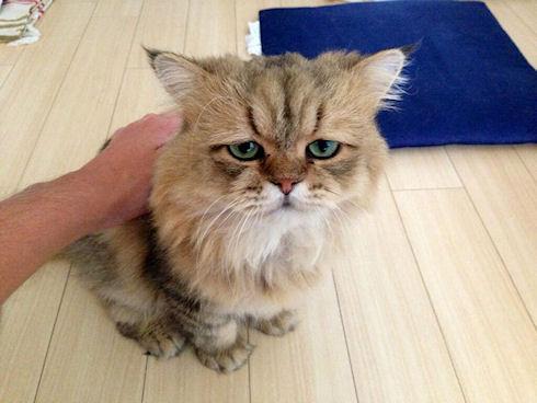 «Огорченный кот» может затмить звезду Webby Awards