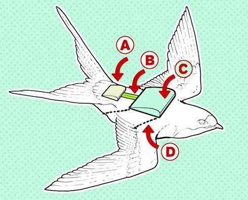В США работают над созданием «птичьего» электрогенератора