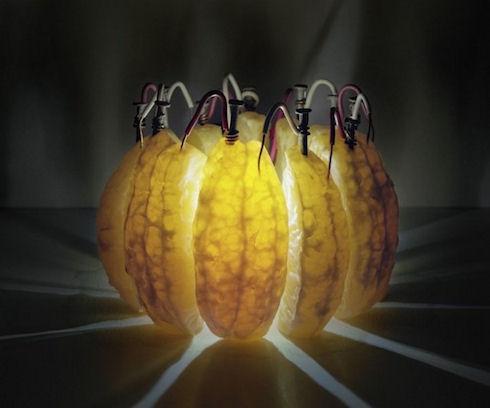 «Вкусные» генераторы энергии