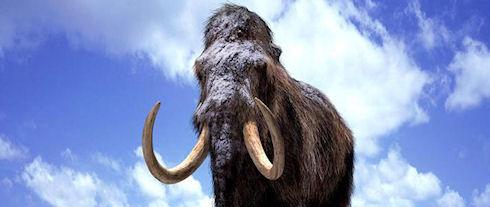 В России может появиться хранилище останков мамонтов