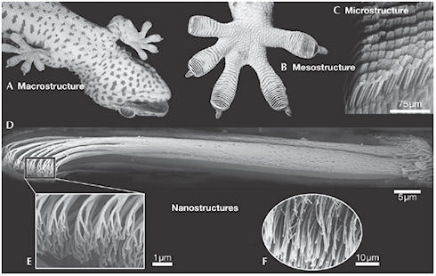 DARPA создала перчатку для подъема плоским поверхностям
