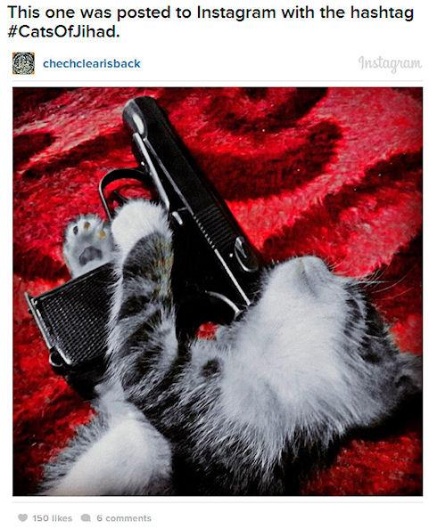 Боевики снимают кошек с оружием для Instagram