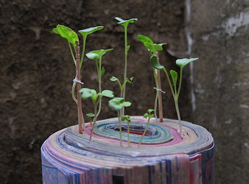 В Японии придумали книги и журналы для выращивания растений