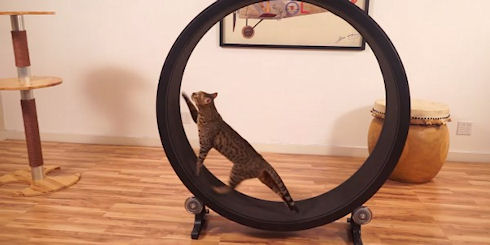 Тренажер для кошек «One Fast Cat»