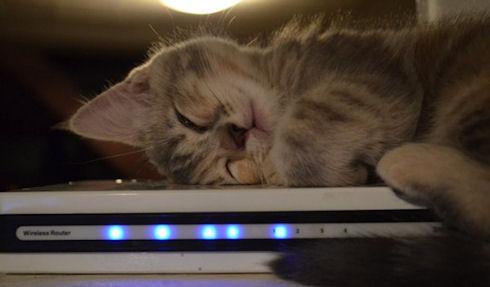 Кошка помогла выявить незащищенные точки Wi-Fi
