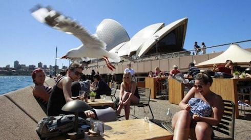 Робот не смог защитить Сиднейскую оперу от чаек
