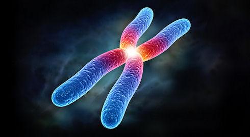 Ученые получили трехмерное изображение хромосом