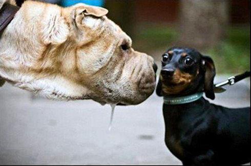 Во время разговора не пугайте собеседника взглядом