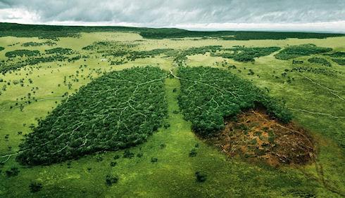 Безопасная пересадка деревьев