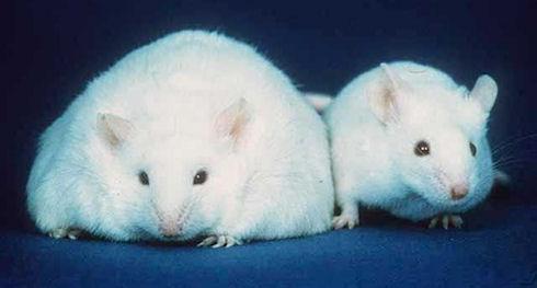 Ученые используют импланты, чтобы уберечь человека от ожирения
