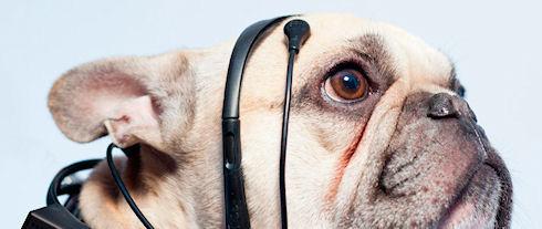 Объявлен сбор средств для создания устройства чтения мыслей собак
