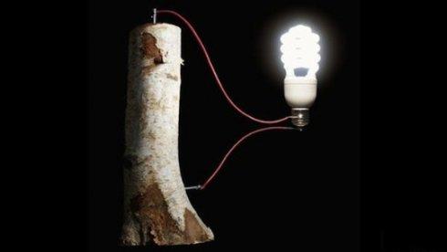 Американские ученые создали батарейки из дерева