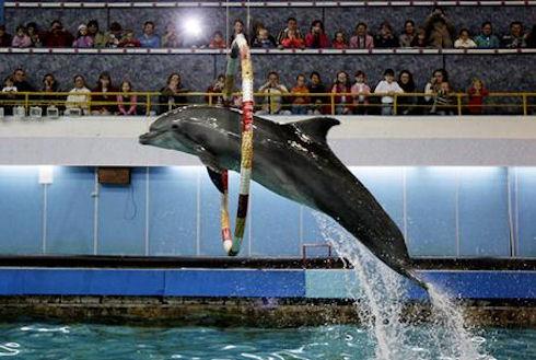 Анапа и ее дельфинарий