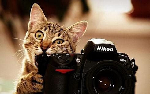 Ученые одели кошкам камеры и удивились