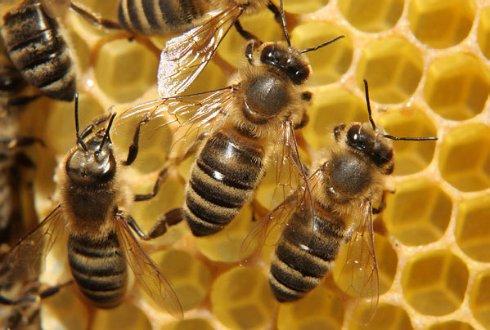 Что дарит нам трудолюбивая пчела?