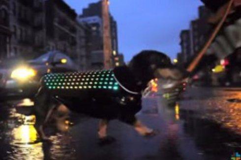 Для собак создали диско-плащ, чтобы те не терялись