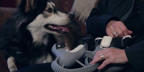 Для собаки-инвалида напечатали протезы на 3D-принтере