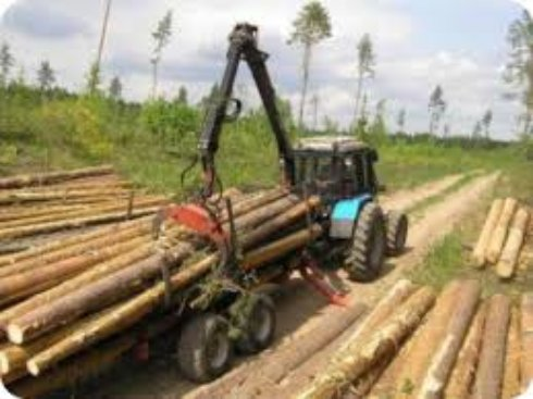 Эффективность ленточной технологии деревообработки