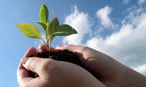 Важность экологических изысканий в строительстве